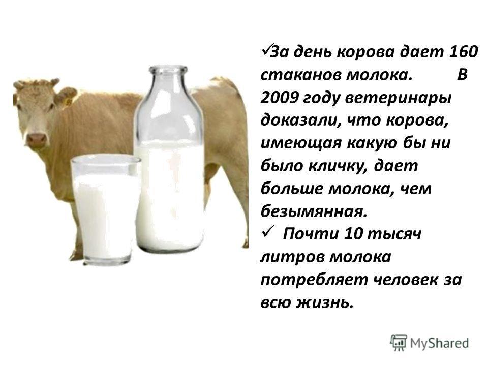За день корова дает 160 стаканов молока. В 2009 году ветеринары доказали, что корова, имеющая какую бы ни было кличку, дает больше молока, чем безымянная. Почти 10 тысяч литров молока потребляет человек за всю жизнь.