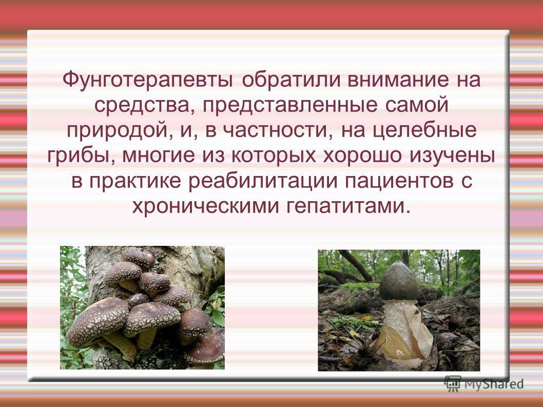 Фунготерапевты обратили внимание на средства, представленные самой природой, и, в частности, на целебные грибы, многие из которых хорошо изучены в практике реабилитации пациентов с хроническими гепатитами.