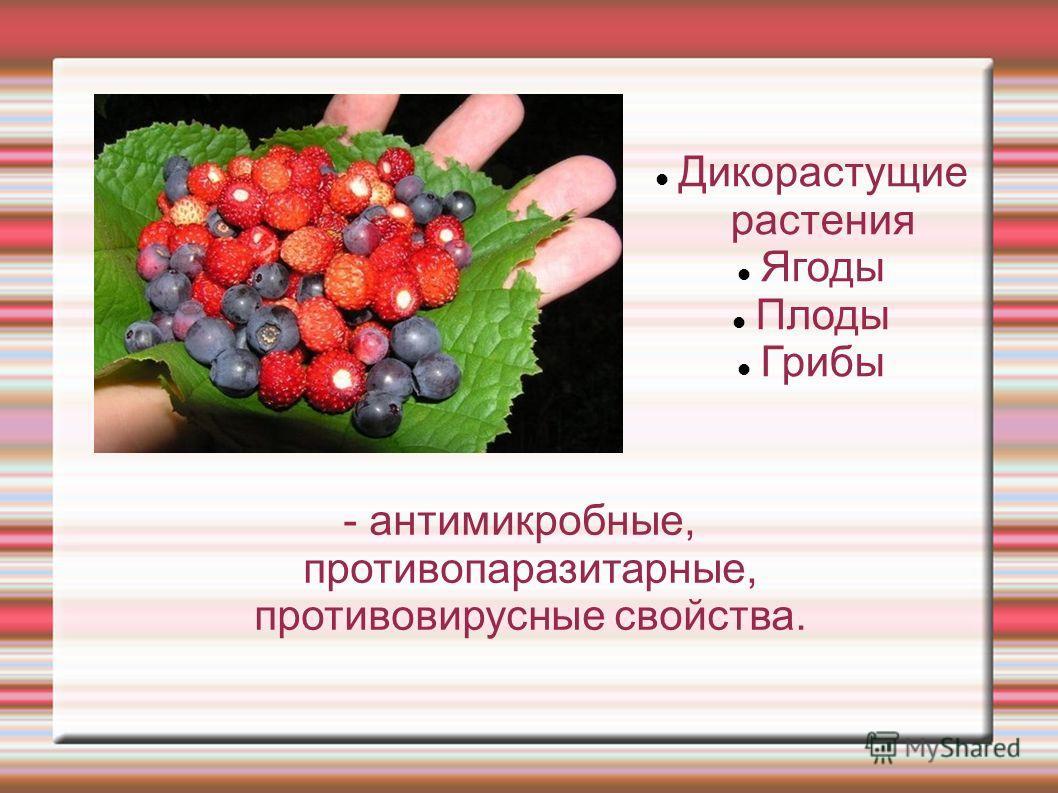 Дикорастущие растения Ягоды Плоды Грибы - антимикробные, противопаразитарные, противовирусные свойства.