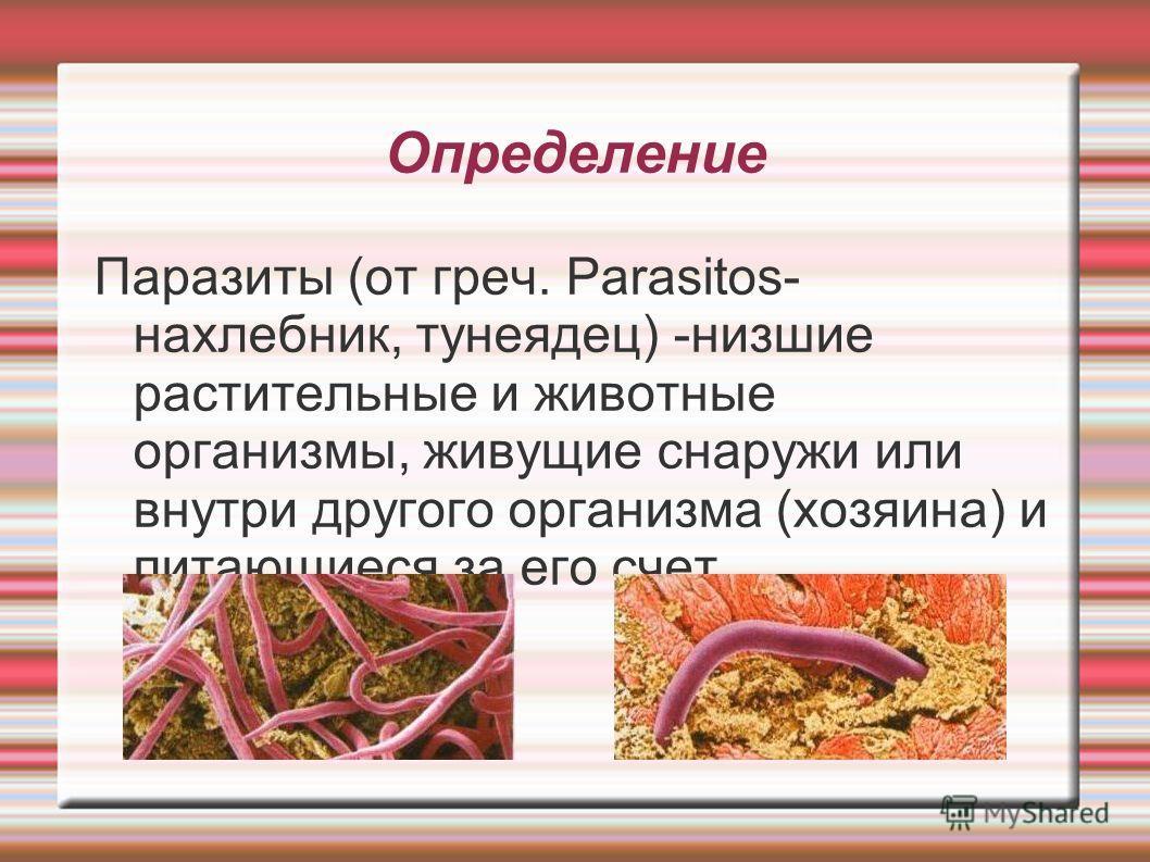 Определение Паразиты (от греч. Parasitos- нахлебник, тунеядец) -низшие растительные и животные организмы, живущие снаружи или внутри другого организма (хозяина) и питающиеся за его счет.