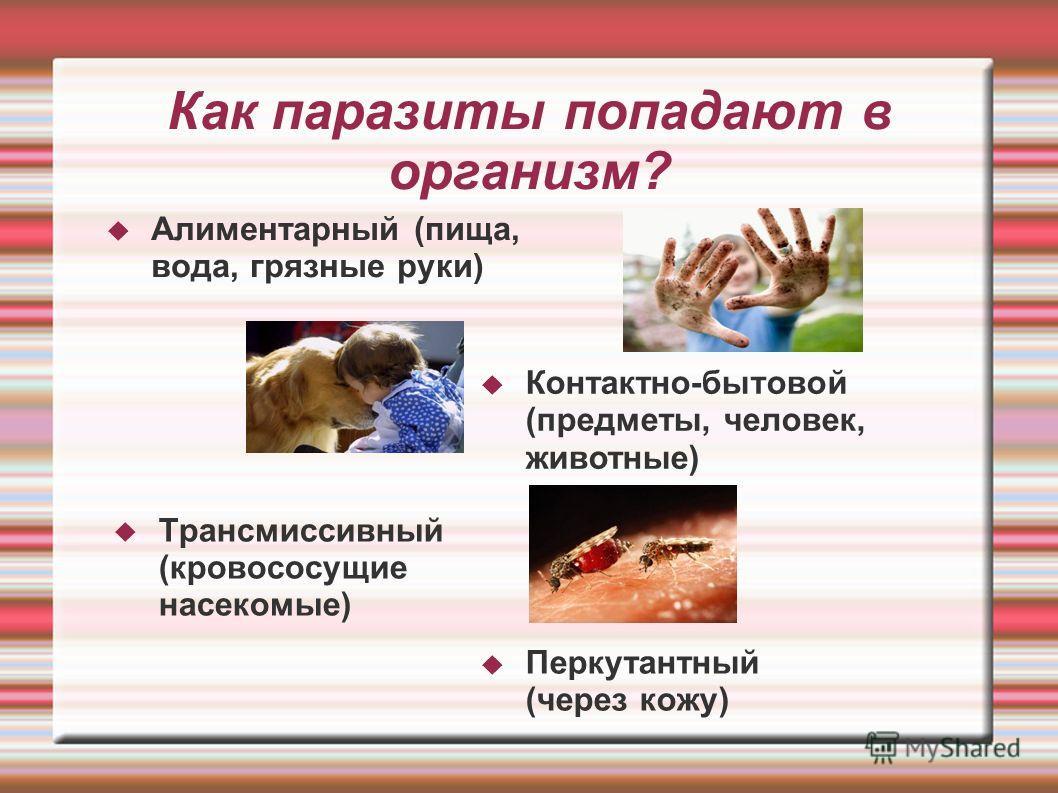 Как паразиты попадают в организм? Алиментарный (пища, вода, грязные руки) Контактно-бытовой (предметы, человек, животные) Трансмиссивный (кровососущие насекомые) Перкутантный (через кожу)