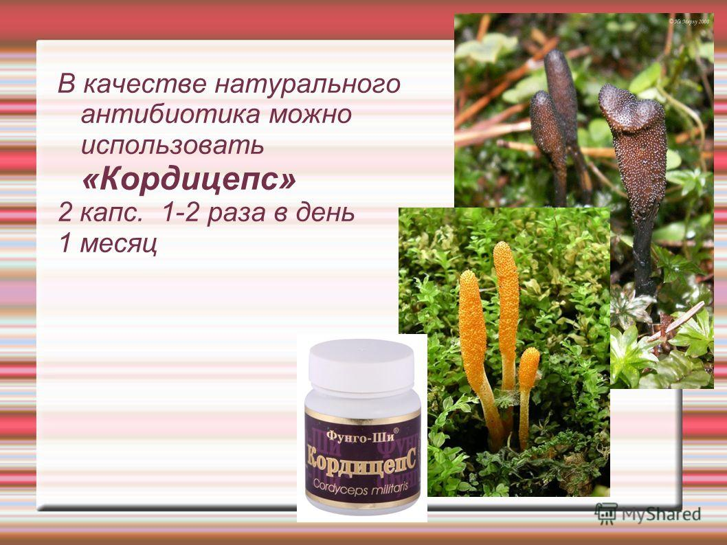 В качестве натурального антибиотика можно использовать «Кордицепс» 2 капс. 1-2 раза в день 1 месяц