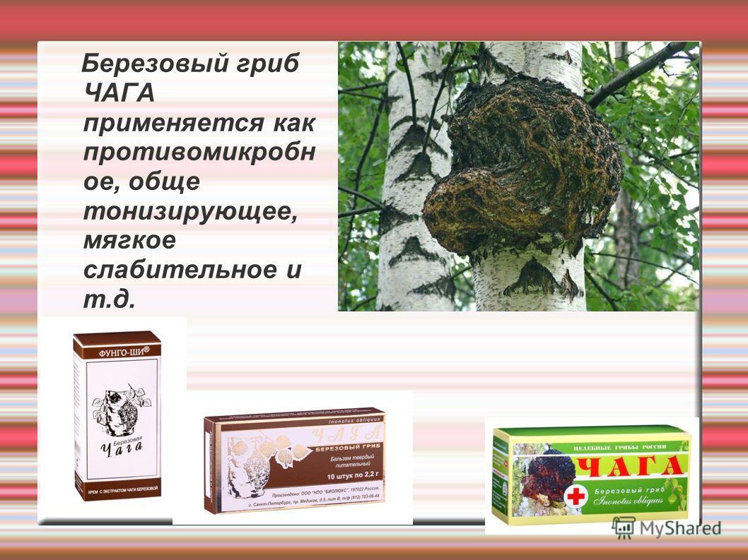 Березовый гриб ЧАГА применяется как противомикробн ое, обще тонизирующее, мягкое слабительное и т.д.