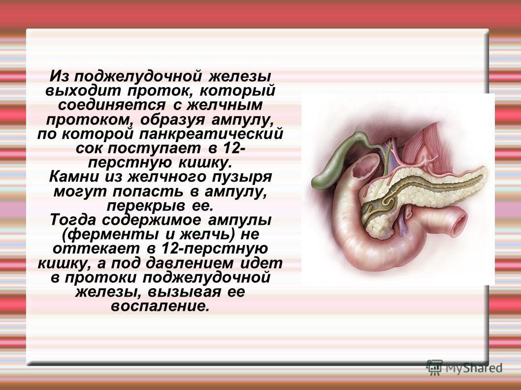 Из поджелудочной железы выходит проток, который соединяется с желчным протоком, образуя ампулу, по которой панкреатический сок поступает в 12- перстную кишку. Камни из желчного пузыря могут попасть в ампулу, перекрыв ее. Тогда содержимое ампулы (ферм