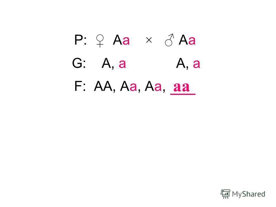 P: Аа × Аа аа G: А, а А, а F: АА, Аа, Аа,