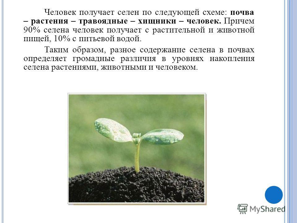 Человек получает селен по следующей схеме: почва – растения – травоядные – хищники – человек. Причем 90% селена человек получает с растительной и животной пищей, 10% с питьевой водой. Таким образом, разное содержание селена в почвах определяет громад