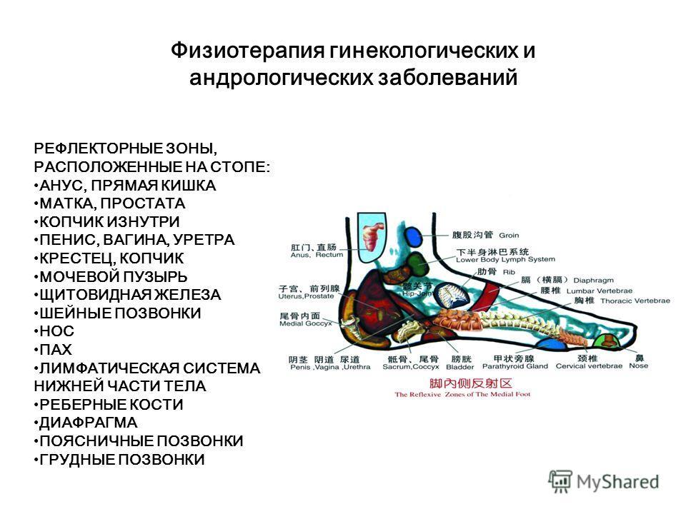 Физиотерапия гинекологических и андрологических заболеваний Многократное воздействие методом массажа «гуаша» на акупунктурные точки «байхой» и «юнцюань» (1) с целью открытия точек акупунктуры. В первую очередь воздействовать на рефлекторную зону надп