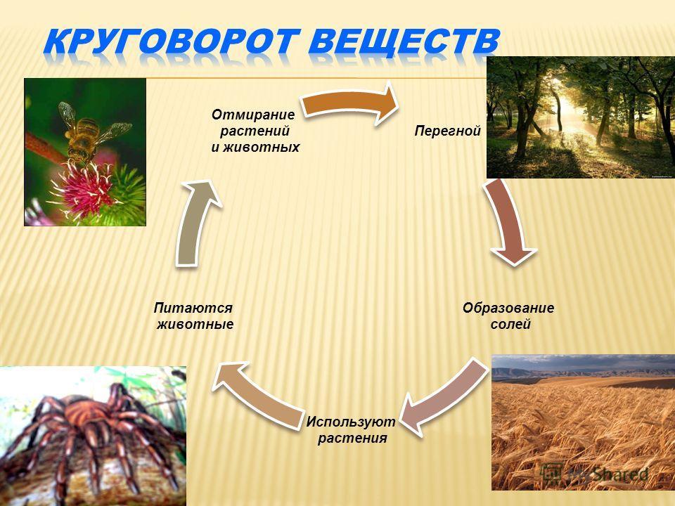 Перегной Образование солей Используют растения Питаются животные Отмирание растений и животных