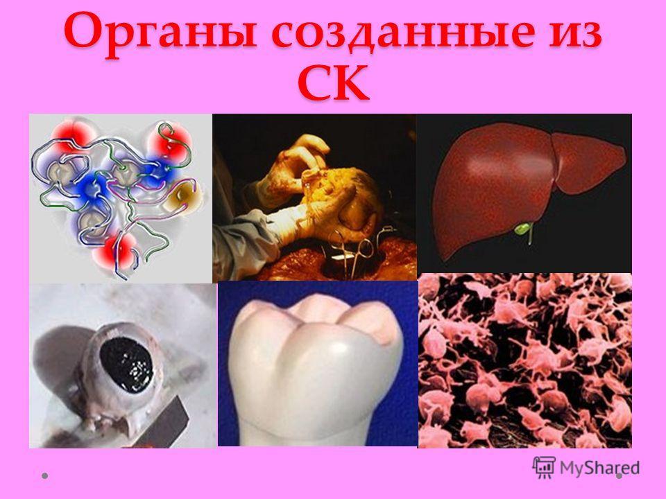 Органы созданные из СК
