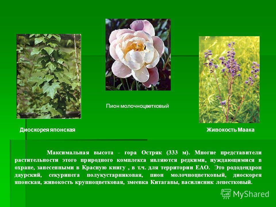 Максимальная высота - гора Остряк (333 м). Многие представители растительности этого природного комплекса являются редкими, нуждающимися в охране, занесенными в Красную книгу, в т.ч. для территории ЕАО. Это рододендрон даурский, секуринега полукустар