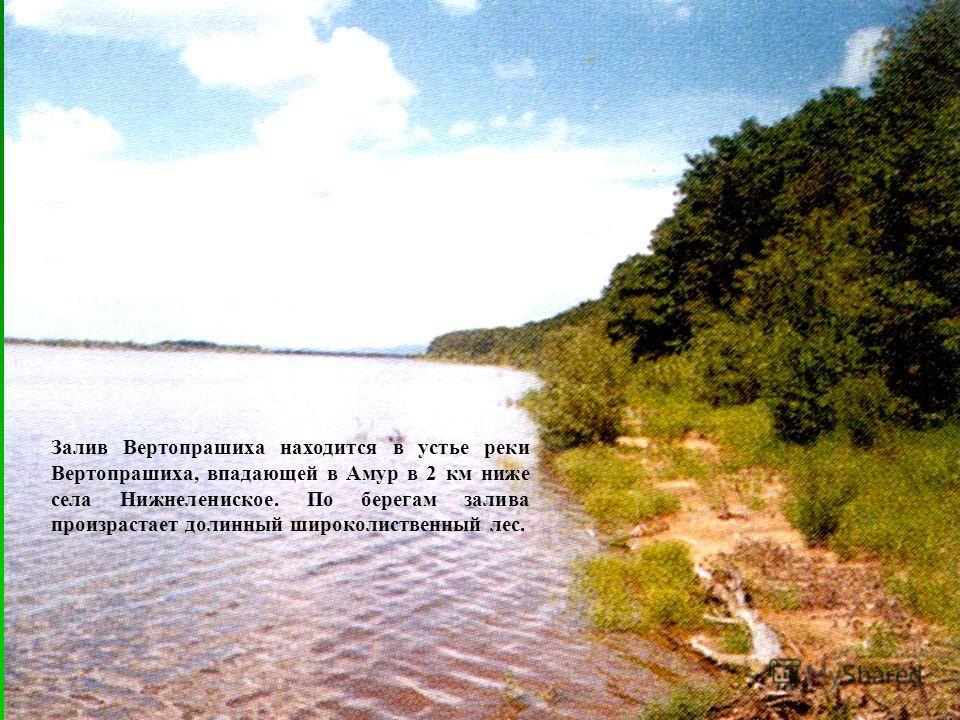 Залив Вертопрашиха находится в устье реки Вертопрашиха, впадающей в Амур в 2 км ниже села Нижнелениское. По берегам залива произрастает долинный широколиственный лес.