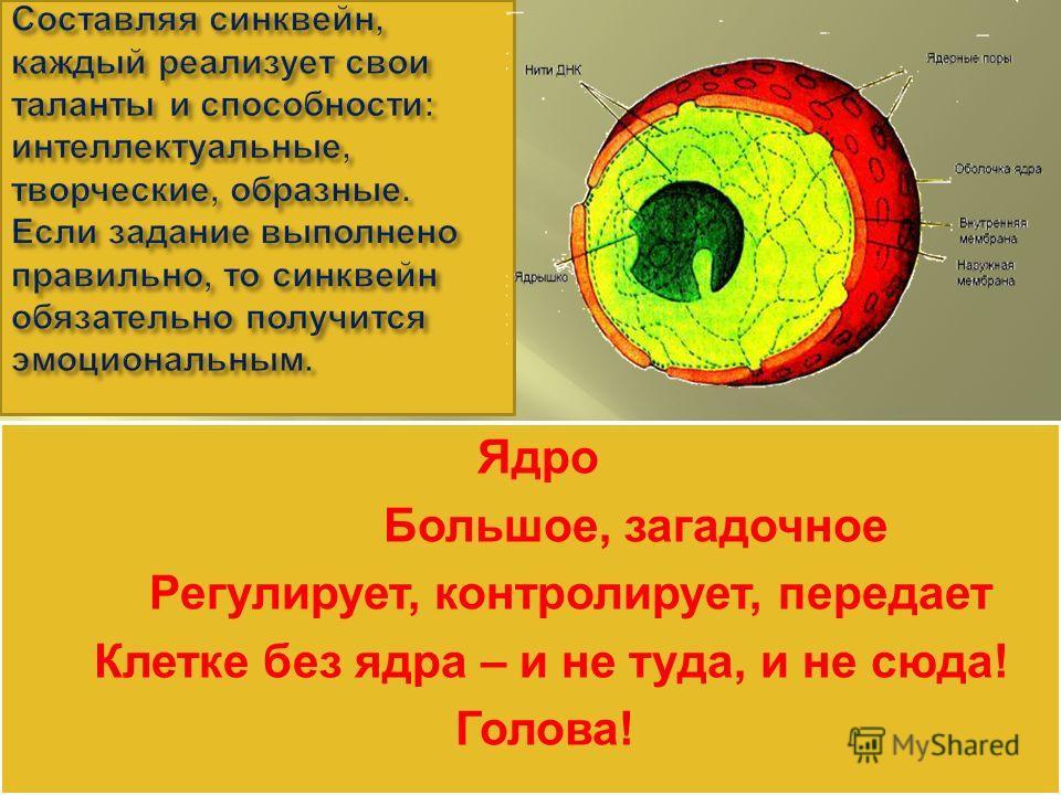 Ядро Большое, загадочное Регулирует, контролирует, передает Клетке без ядра – и не туда, и не сюда! Голова! Ядро Большое, загадочное Регулирует, контролирует, передает Клетке без ядра – и не туда, и не сюда! Голова!