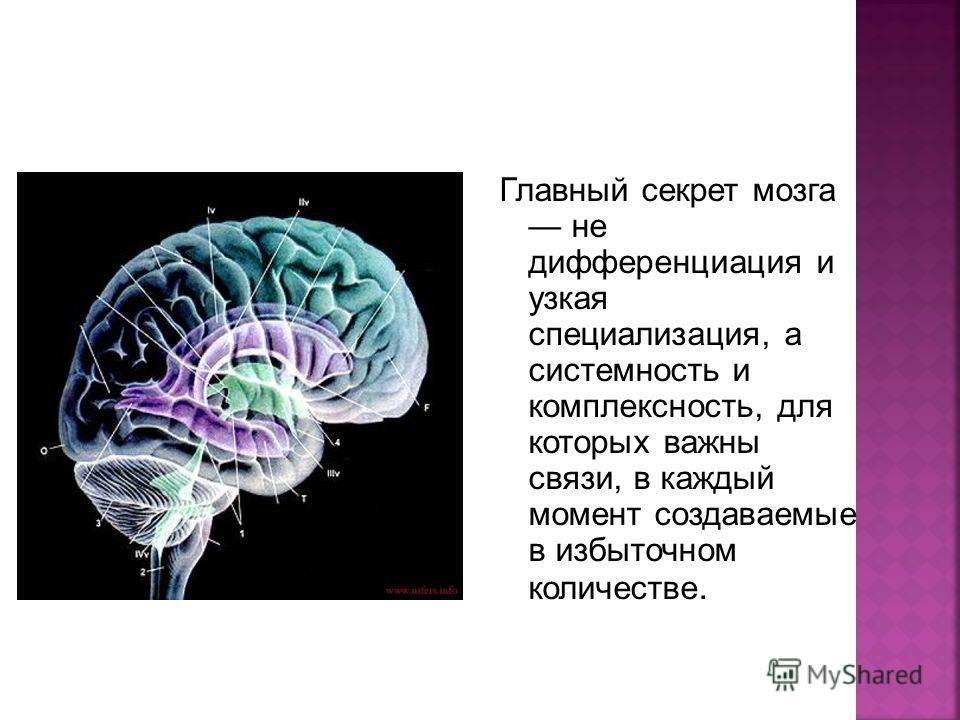 Главный секрет мозга не дифференциация и узкая специализация, а системность и комплексность, для которых важны связи, в каждый момент создаваемые в избыточном количестве.