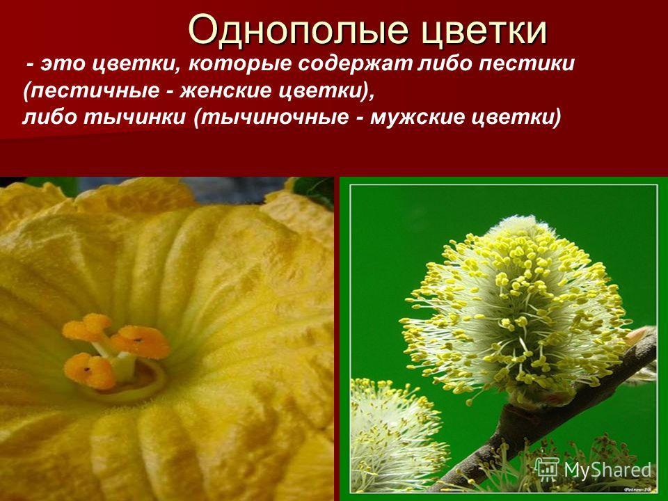 Однополые цветки - это цветки, которые содержат либо пестики (пестичные - женские цветки), либо тычинки (тычиночные - мужские цветки)