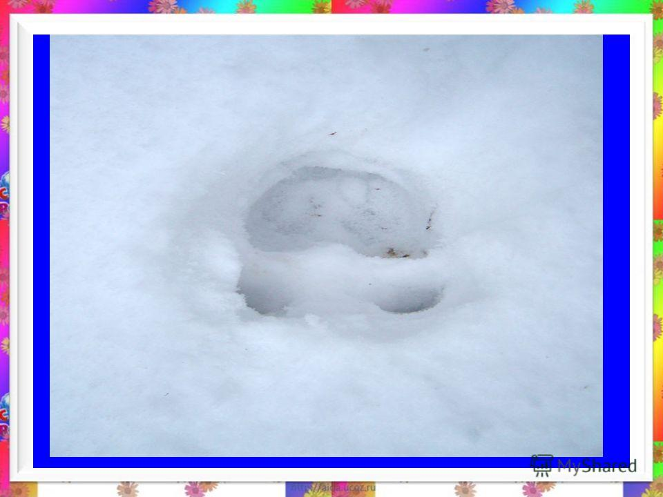 Чей это след оставлен на снегу? лиса заяц белка нет да