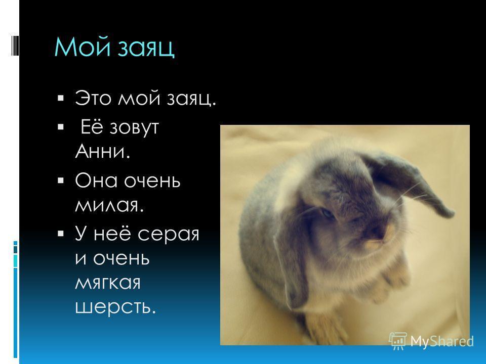 Мой заяц Это мой заяц. Её зовут Анни. Она очень милая. У неё серая и очень мягкая шерсть.