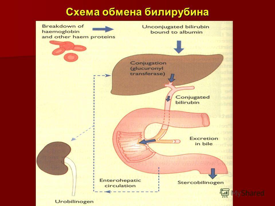 Схема обмена билирубина