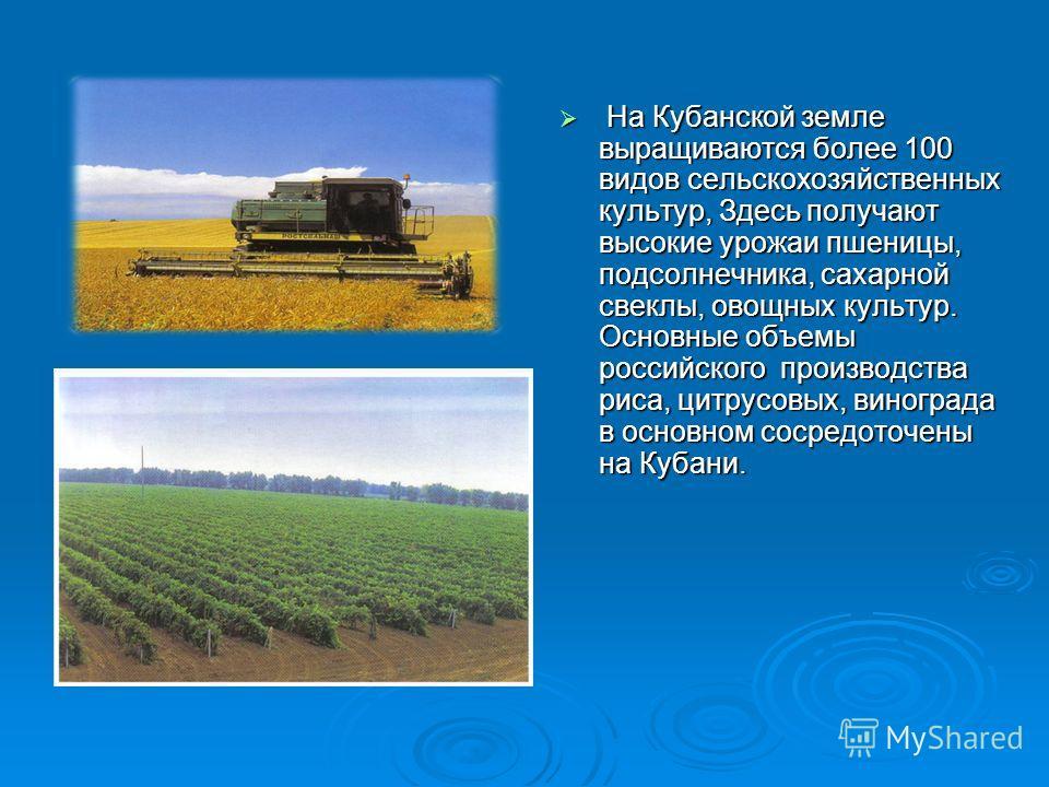 На Кубанской земле выращиваются более 100 видов сельскохозяйственных культур, Здесь получают высокие урожаи пшеницы, подсолнечника, сахарной свеклы, овощных культур. Основные объемы российского производства риса, цитрусовых, винограда в основном соср