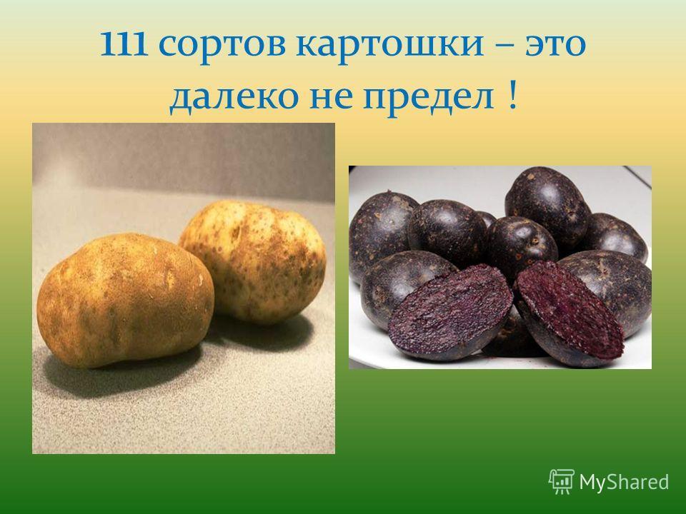 111 сортов картошки – это далеко не предел !
