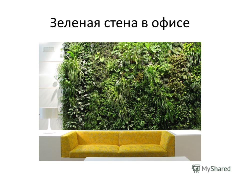 Зеленая стена в офисе