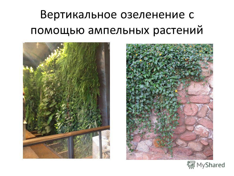 Вертикальное озеленение с помощью ампельных растений
