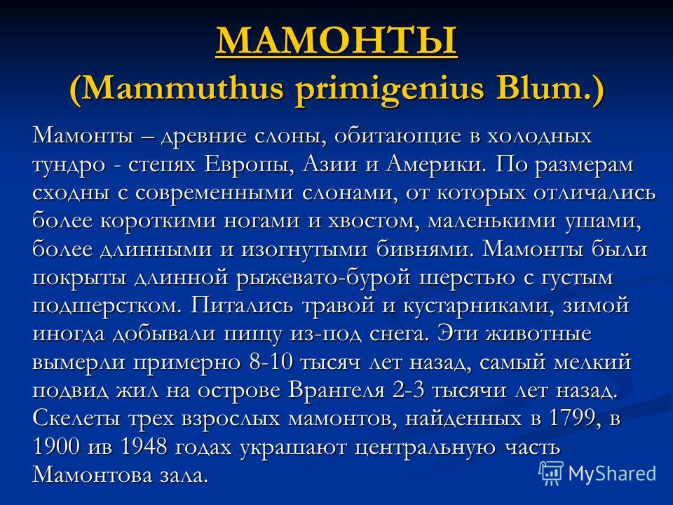 МАМОНТЫ МАМОНТЫ (Mammuthus primigenius Blum.) МАМОНТЫ Мамонты – древние слоны, обитающие в холодных тундро - степях Европы, Азии и Америки. По размерам сходны с современными слонами, от которых отличались более короткими ногами и хвостом, маленькими