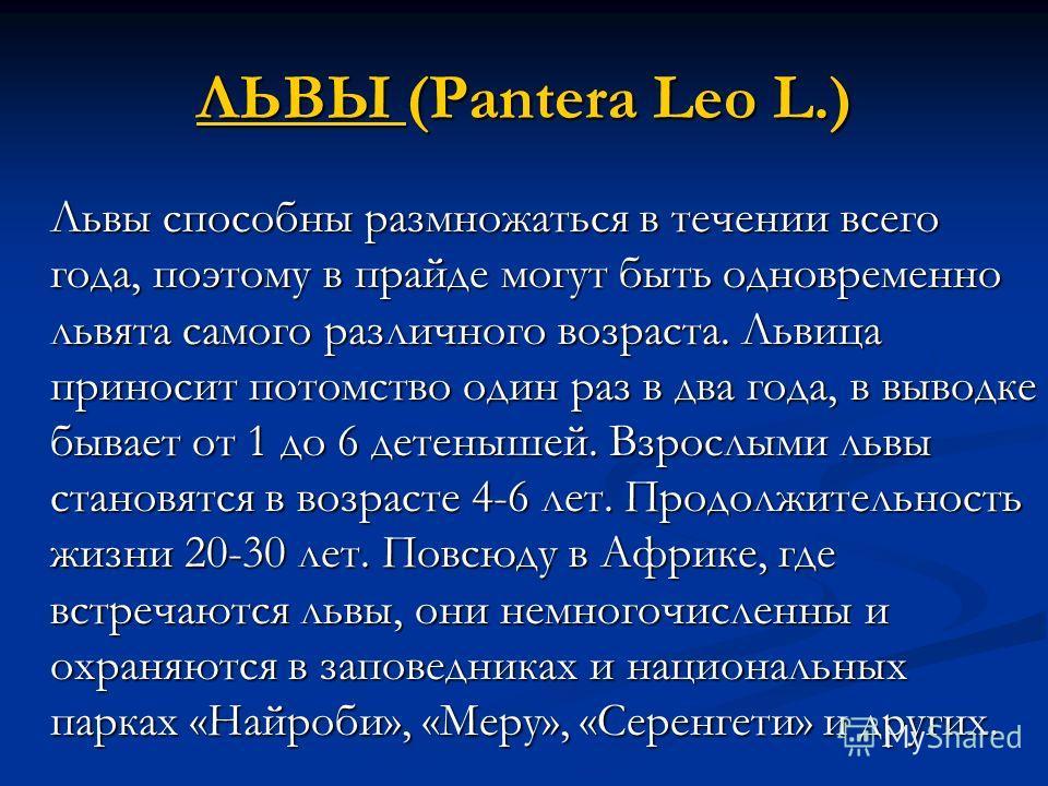 ЛЬВЫ ЛЬВЫ (Pantera Leo L.) ЛЬВЫ Львы способны размножаться в течении всего года, поэтому в прайде могут быть одновременно львята самого различного возраста. Львица приносит потомство один раз в два года, в выводке бывает от 1 до 6 детенышей. Взрослым