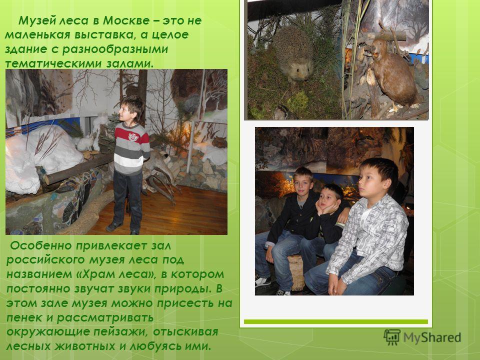 Музей леса в Москве – это не маленькая выставка, а целое здание с разнообразными тематическими залами. Особенно привлекает зал российского музея леса под названием «Храм леса», в котором постоянно звучат звуки природы. В этом зале музея можно присест
