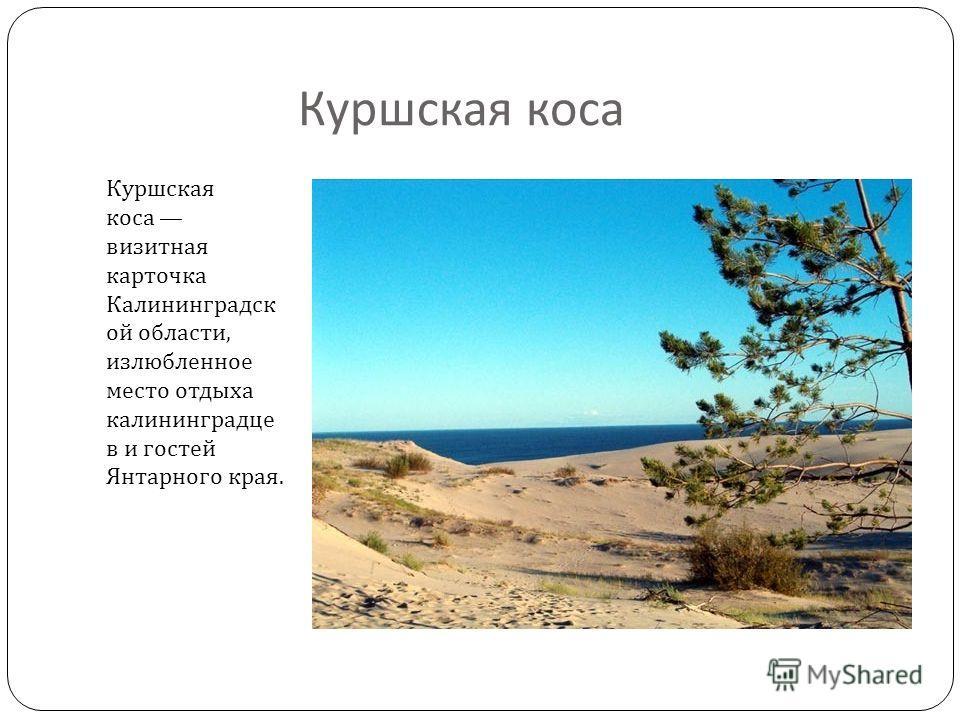 Куршская коса Куршская коса визитная карточка Калининградск ой области, излюбленное место отдыха калининградце в и гостей Янтарного края.