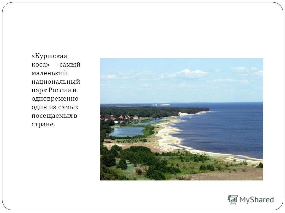 « Куршская коса » самый маленький национальный парк России и одновременно один из самых посещаемых в стране.