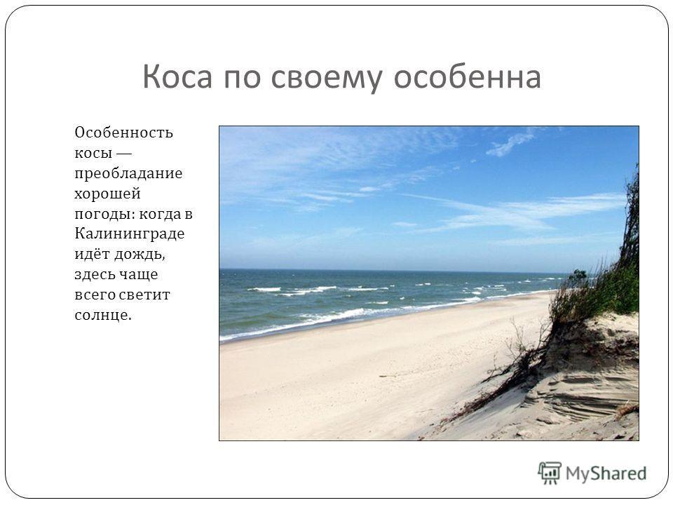 Коса по своему особенна Особенность косы преобладание хорошей погоды : когда в Калининграде идёт дождь, здесь чаще всего светит солнце.