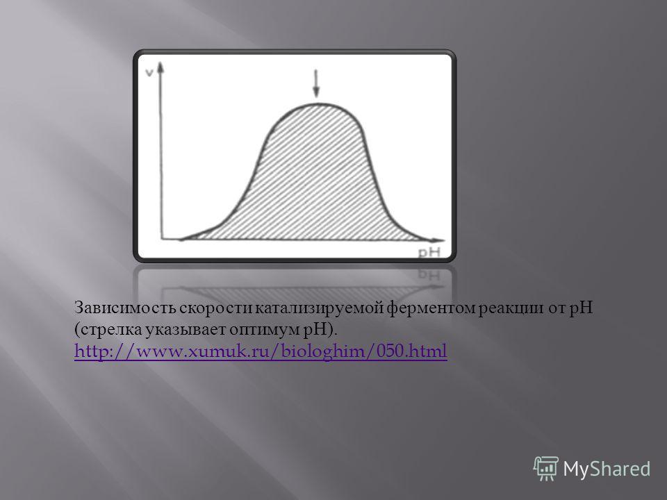 Зависимость скорости катализируемой ферментом реакции от рН ( стрелка указывает оптимум рН ). http://www.xumuk.ru/biologhim/050.html http://www.xumuk.ru/biologhim/050.html