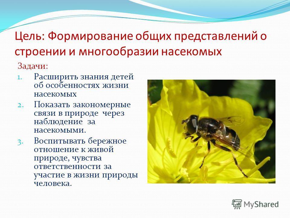 Цель: Формирование общих представлений о строении и многообразии насекомых Задачи: 1. Расширить знания детей об особенностях жизни насекомых 2. Показать закономерные связи в природе через наблюдение за насекомыми. 3. Воспитывать бережное отношение к