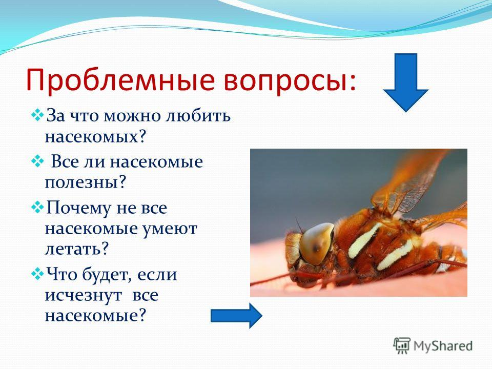 Проблемные вопросы: За что можно любить насекомых? Все ли насекомые полезны? Почему не все насекомые умеют летать? Что будет, если исчезнут все насекомые?