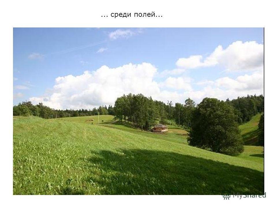 ... среди полей...