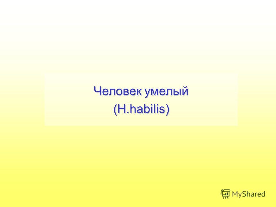 Человек умелый (H.habilis)