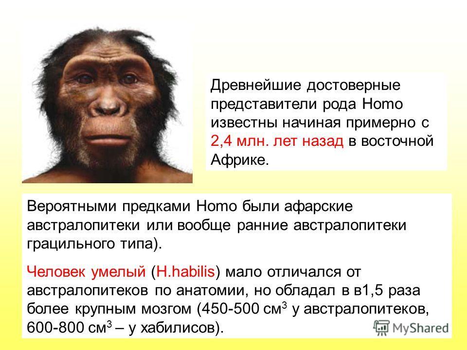 Вероятными предками Homo были афарские австралопитеки или вообще ранние австралопитеки грацильного типа). Человек умелый (H.habilis) мало отличался от австралопитеков по анатомии, но обладал в в1,5 раза более крупным мозгом (450-500 см 3 у австралопи