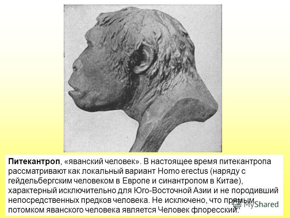 Питекантроп, «яванский человек». В настоящее время питекантропа рассматривают как локальный вариант Homo erectus (наряду с гейдельбергским человеком в Европе и синантропом в Китае), характерный исключительно для Юго-Восточной Азии и не породивший неп
