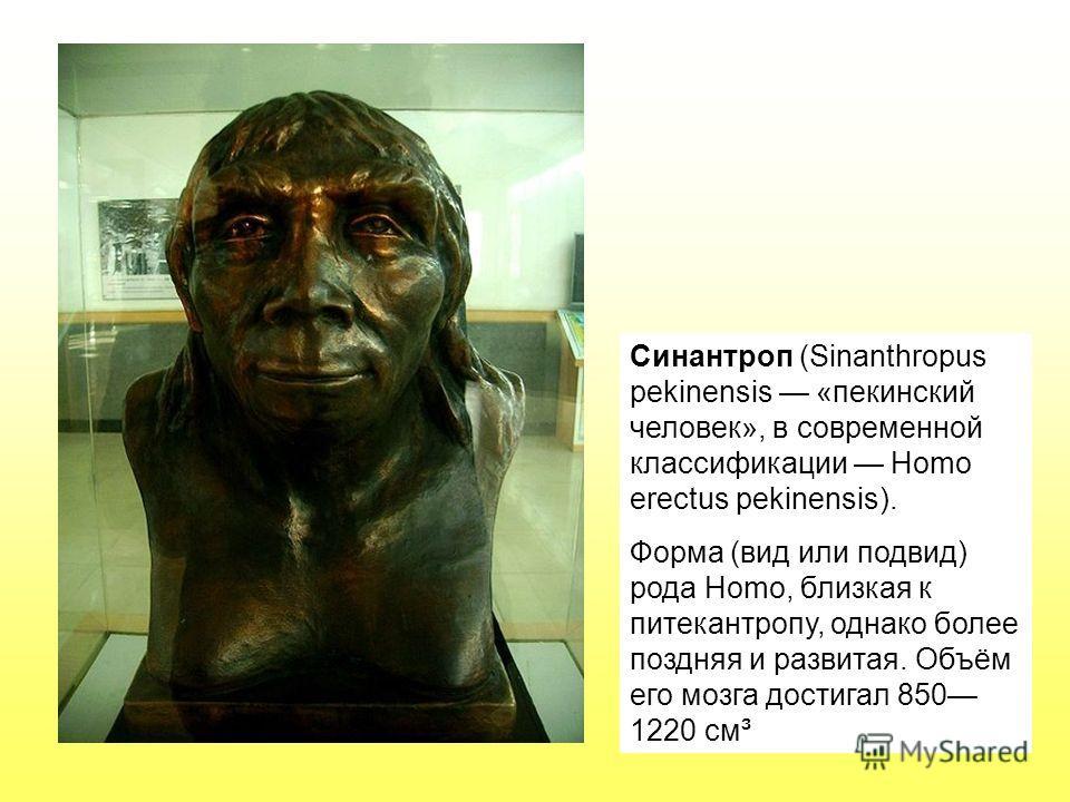 Синантроп (Sinanthropus pekinensis «пекинский человек», в современной классификации Homo erectus pekinensis). Форма (вид или подвид) рода Homo, близкая к питекантропу, однако более поздняя и развитая. Объём его мозга достигал 850 1220 см³