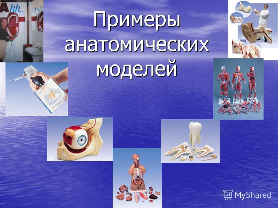 Примеры анатомических моделей