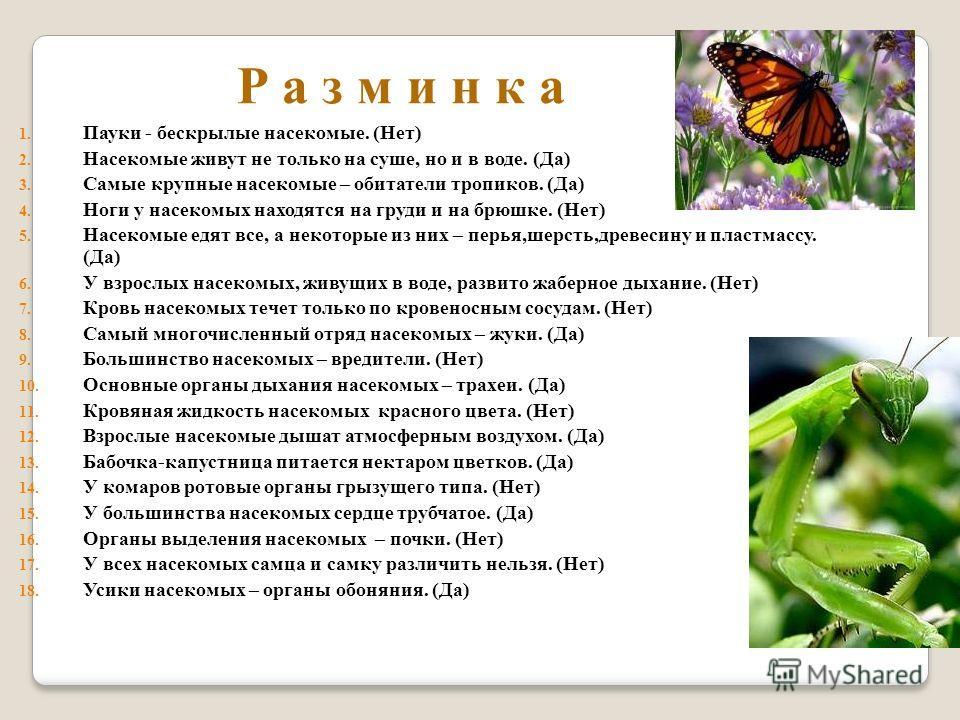 Р а з м и н к а 1. Пауки - бескрылые насекомые. (Нет) 2. Насекомые живут не только на суше, но и в воде. (Да) 3. Самые крупные насекомые – обитатели тропиков. (Да) 4. Ноги у насекомых находятся на груди и на брюшке. (Нет) 5. Насекомые едят все, а нек