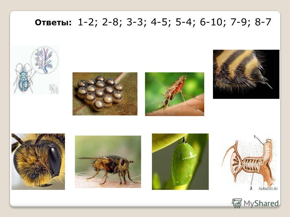 Ответы: 1-2; 2-8; 3-3; 4-5; 5-4; 6-10; 7-9; 8-7