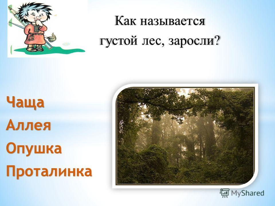Как называется густой лес, заросли? АллеяОпушкаПроталинка Чаща