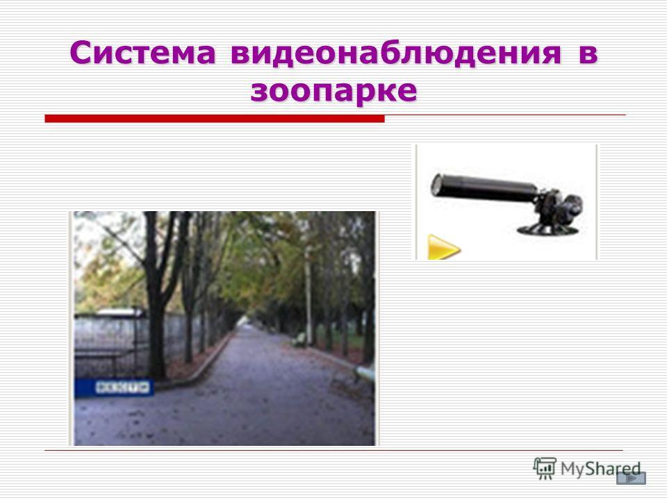 Система видеонаблюдения в зоопарке