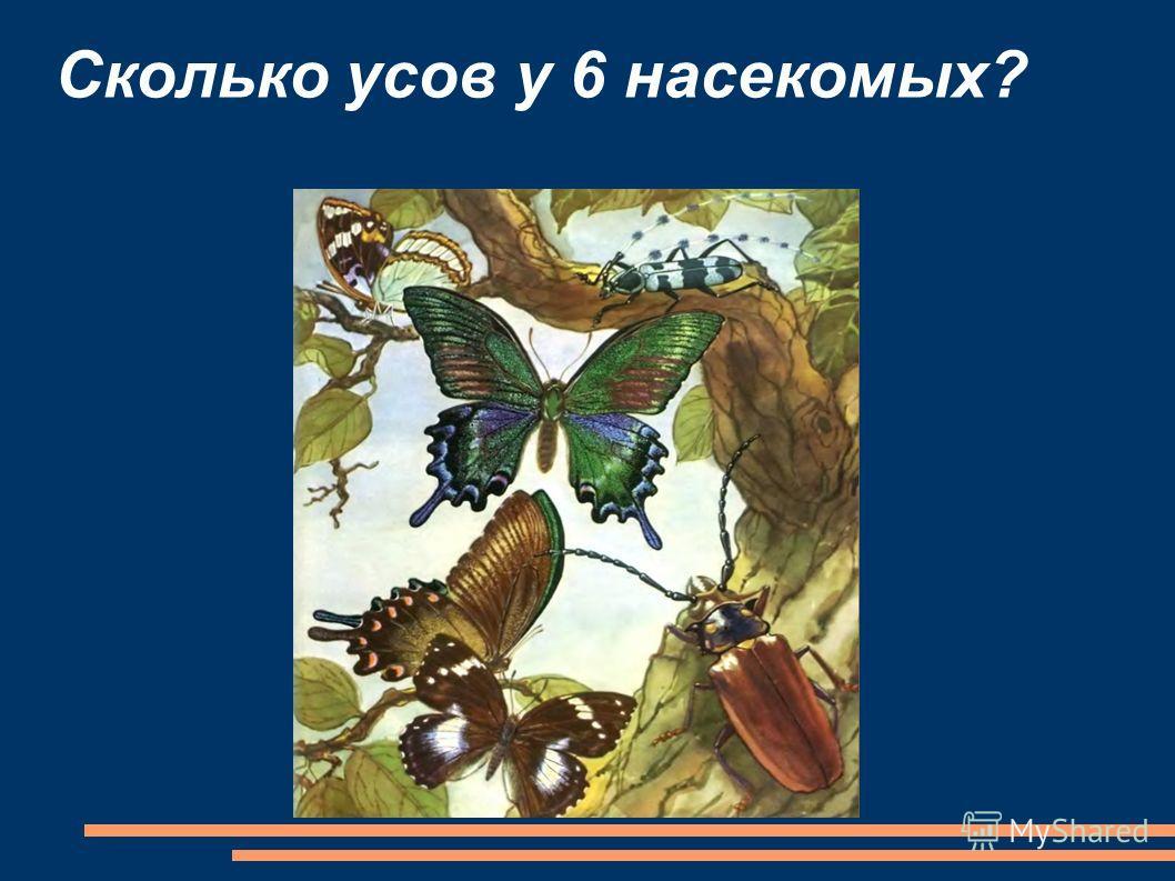 Сколько усов у 6 насекомых?