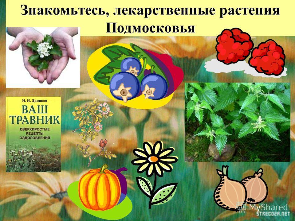 Знакомьтесь, лекарственные растения Подмосковья