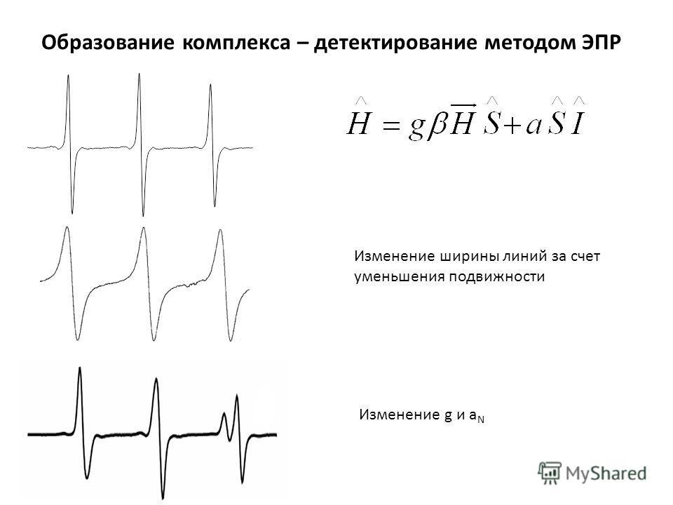 Образование комплекса – детектирование методом ЭПР Изменение ширины линий за счет уменьшения подвижности Изменение g и a N