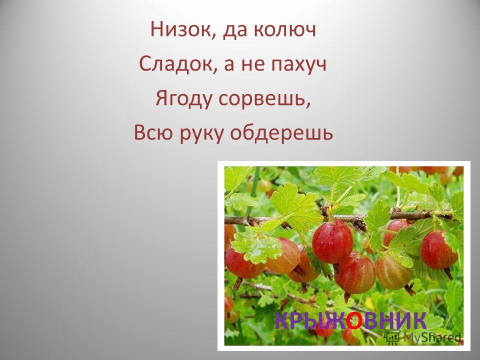 На бахче у нас растет, Как разрежешь, сок течет Свеж и сладок он на вкус, Называется …