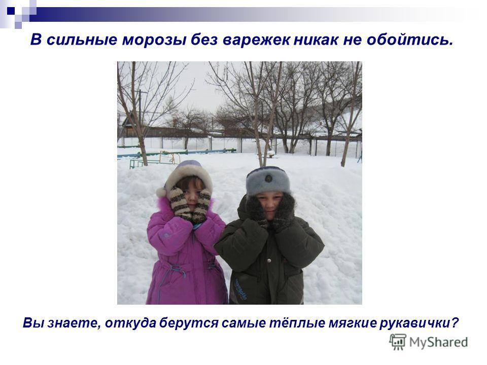 Вы знаете, откуда берутся самые тёплые мягкие рукавички? В сильные морозы без варежек никак не обойтись.