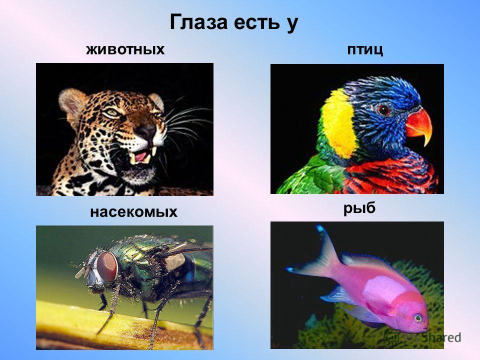 Глаза есть у животныхптиц насекомых рыб
